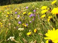 Land fördert Kita-Garten in Dromersheim