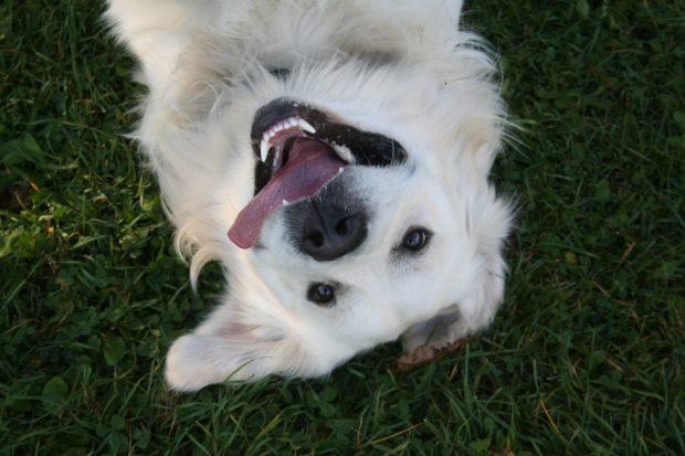 SPD beantragt Hundewiese für Bingen